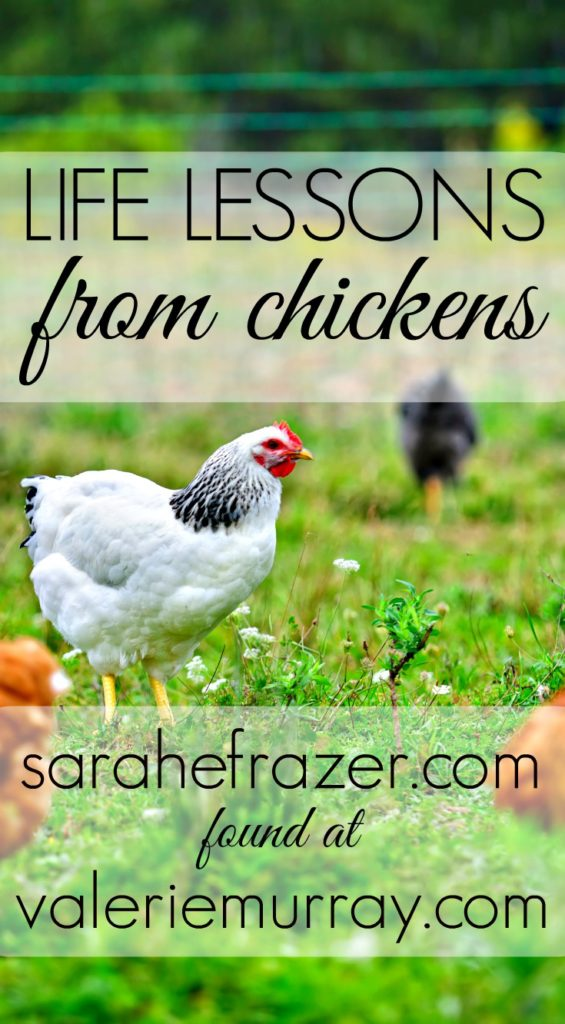 Did you know we can learn life lessons from chickens? Sarah Frazer shares about God's provision and care for us.l